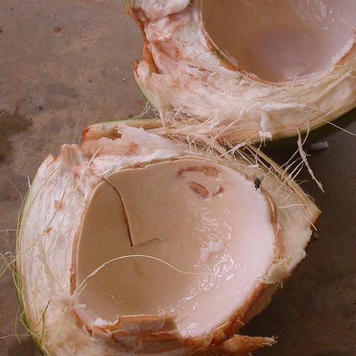 Coconut Plasma
